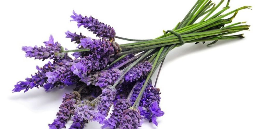 Lavender Oil for insomnia and sleep problems